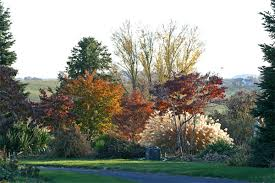 viette s november gardens at viette s