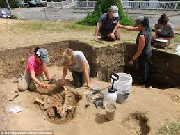 archaeologists say bones of constance the calf reveal spot of