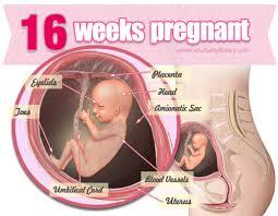 Janin 4 Bulan Sudah Bisa Apa Keluhan Kehamilan 16 Minggu Mariasoraya Com