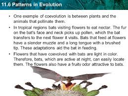 11 6 patterns in evolution key concept evolution occurs in