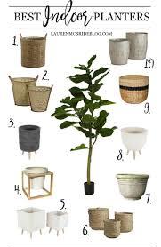 best planters best indoor planters lauren mcbride
