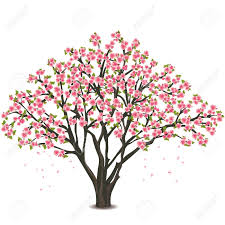 11 709 cherry blossom tree stock illustrations cliparts and