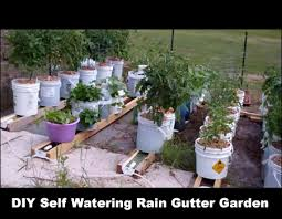 diyselfwateringrainguttergrowsystem jpg