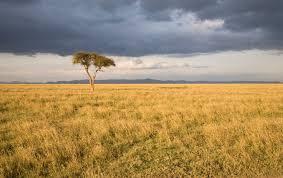 grasslands homework help ks1 and ks2 geography grasslands