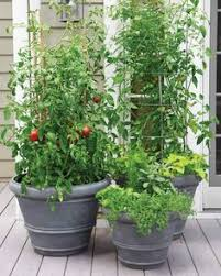 a container vegetable garden that u0027s very easy to take care of and