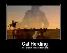 Herding Cats Meme - cowboys herding cats cowboys cat and commercial