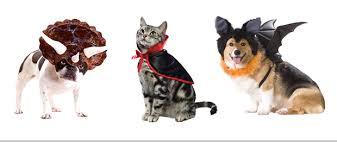 pet costumes pet costume contest fwtx