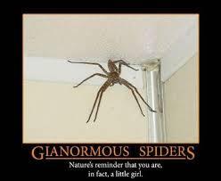 Huge Spider Memes Image Memes - 22 best demotivational posters images on pinterest ha ha