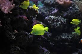 Marine Aquascaping Techniques Change Look Saltwater Aquarium