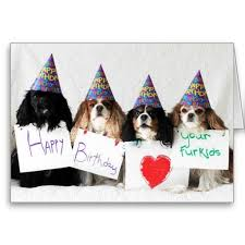 happy birthday pictures dogs happy birthday from the day