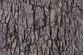 tree bark texture background images pictures
