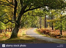 the winding road through bolderwood ornamental drive in the new