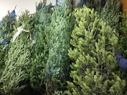 where to recycle your tree in denver lakewood
