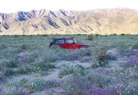 chasing the desert wildflowers laura u0027s palette