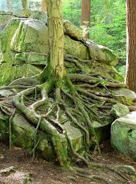 Maryland forest images Ancient forests may be closer than you think southern maryland jpg