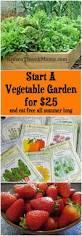 2373 best images about garden ideas on pinterest