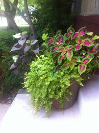 Container Gardening Potatoes - 337 best container gardens images on pinterest gardening