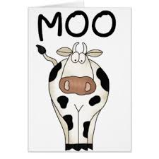 cow greeting cards cows greeting cards zazzle