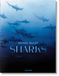 michael muller sharks face to face with the ocean u0027s endangered