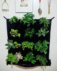 how to start an indoor herb garden the indoor gardens