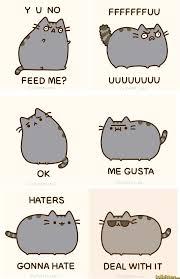 Random Cat Meme - cat memes lolkitten