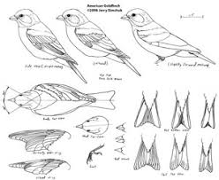 woodworking bird patterns for wood carving plans pdf download free