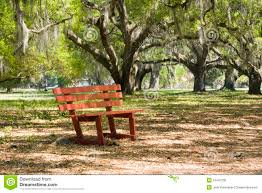 red park bench in live oak trees royalty free stock photos image