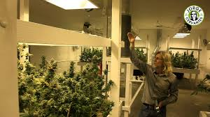 grow cannabis u2013 indoor light efficiency u2013 by jorge cervantes