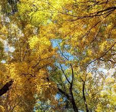 favorite fall color tour destinations drives adventure mom