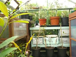serre jardin d hiver jardin d u0027hiver vexford house