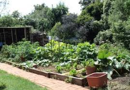 beautiful vegetable garden 3 vegetable garden tips for decluttering