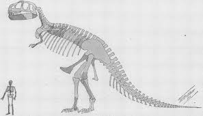 He Made Accurate Drawings Of The Human Anatomy Drawing Tyrannosaurus U2013 You U0027re Probably Doing It Wrong U2013 Phenomena