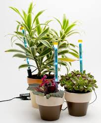 Build Your Own Indoor Garden - create a light system to keep houseplants thriving during the