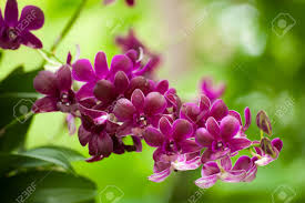 colorful orchids and ornamental plants in the garden refreshing