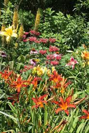 Summer Flower Garden Ideas - 348 best plant combinations images on pinterest garden ideas