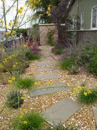 california native drought tolerant plants kathy u0027s landscaping landscape before and after