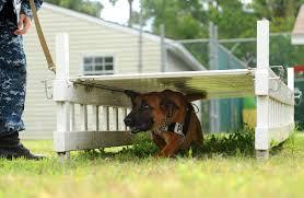 dog runs large dog runs large dog runs suppliers and at