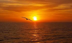 relazione il gabbiano jonathan livingston il gabbiano jonathan livingston jonathan livingston seagull