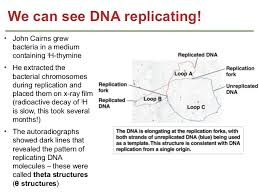 genetics chapter 7 dna structure and replication