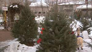 best 28 christmas tree farm denver best places to cut your own