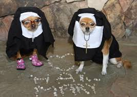 Dogs Dressed Up In Clothes Aren U0027t Cute Ask Dog Lady Cleveland Com