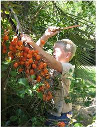 native brazilian plants sustainability free full text agricultural biodiversity in