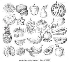 fruit sketch stock images royalty free images u0026 vectors