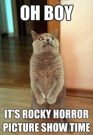 Rocky Horror Meme - oh boy it s rocky cat meme cat planet cat planet