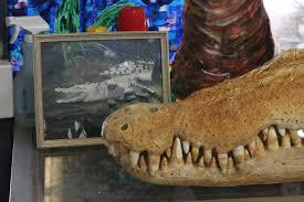 Backyard Skulls The Northern Territory Couple Who Cook Crocodile Buffalo And