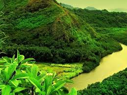 125 best green my favorite color images on pinterest nature