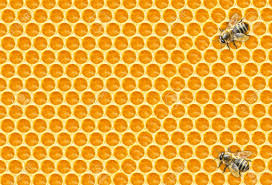 worker bees on honeycomb stock photo picture and royalty free