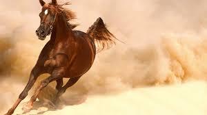 animals running horse wallpaper 1920x1200 for hd 16 9 high