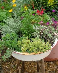how to use herbs in the landscape hgtv
