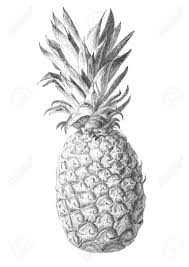 coloring page elegant drawing a pineapple howtodraw emoji